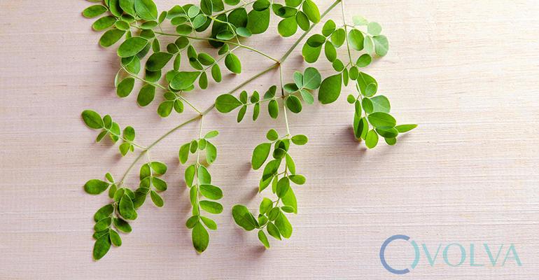 เถาเอ็นอ่อน สุดยอดพืชสมุนไพรพื้นบ้าน ที่คุณอาจอยากรู้จัก